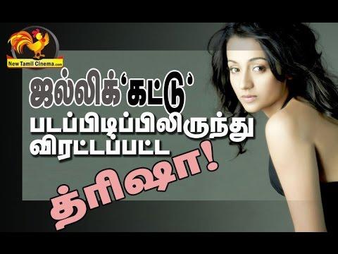 Trisha Attacked In The Shooting Spot-Jallikattu Issue